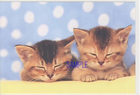 ネコの写真のポストカード