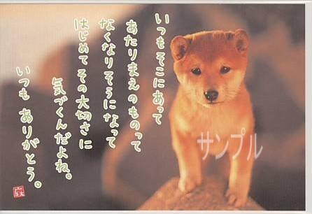 「犬の写真に感謝のメッセージが付されたポストカード」商品詳細紹介・注文のページへ進む