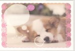 [PN-327]犬・ポストカード「ムニャ ムニャ」(メッセージ欄付)本体価格150円