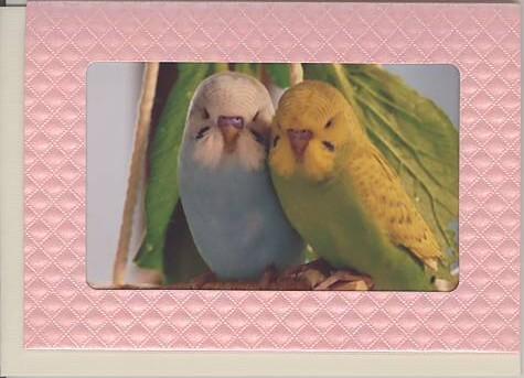 【WPF-01-604】フォトフレームカード(ピンク)の商品詳細紹介・注文のページへ進む