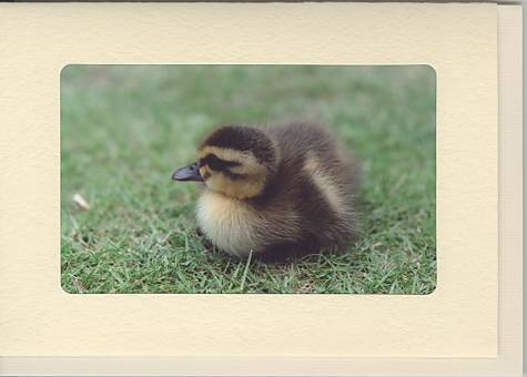 L判写真をセットできるフォトフレームカードです。