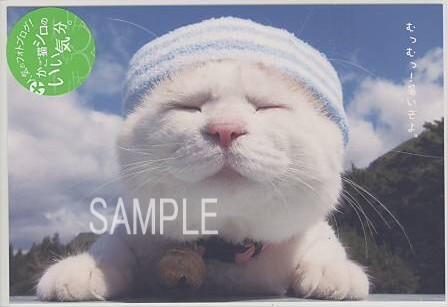 かご猫シロ・ポストカード