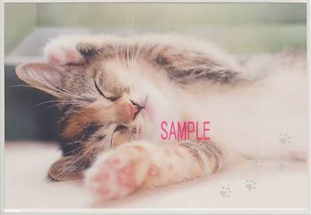 ひなたぼっこ中の猫の写真のポストカード
