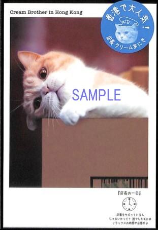 香港で人気の店長猫、クリームあにきのポストカード